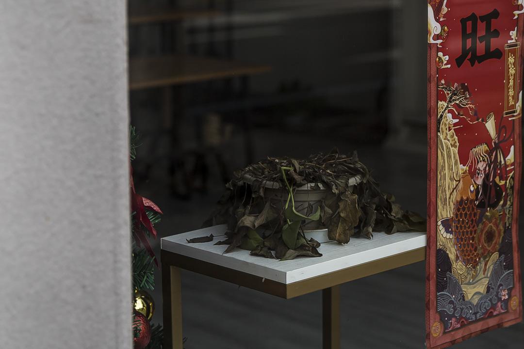 武漢武昌區,商店內枯萎的植物。大部分商鋪因封城一直處於關閉狀態,持續兩個月。