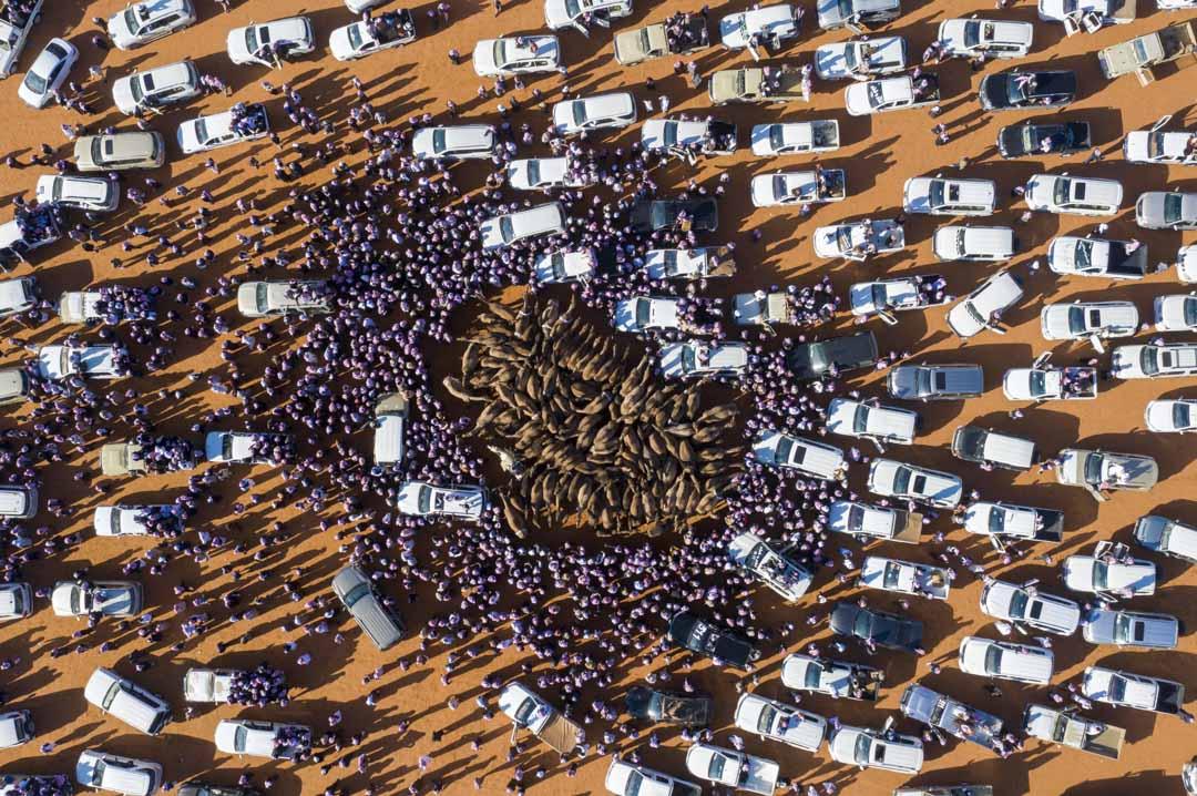 2020年1月7日,沙烏地阿拉伯舉行的年度國王阿卜杜勒駱駝節期間,汽車和人包圍著出售的駱駝。