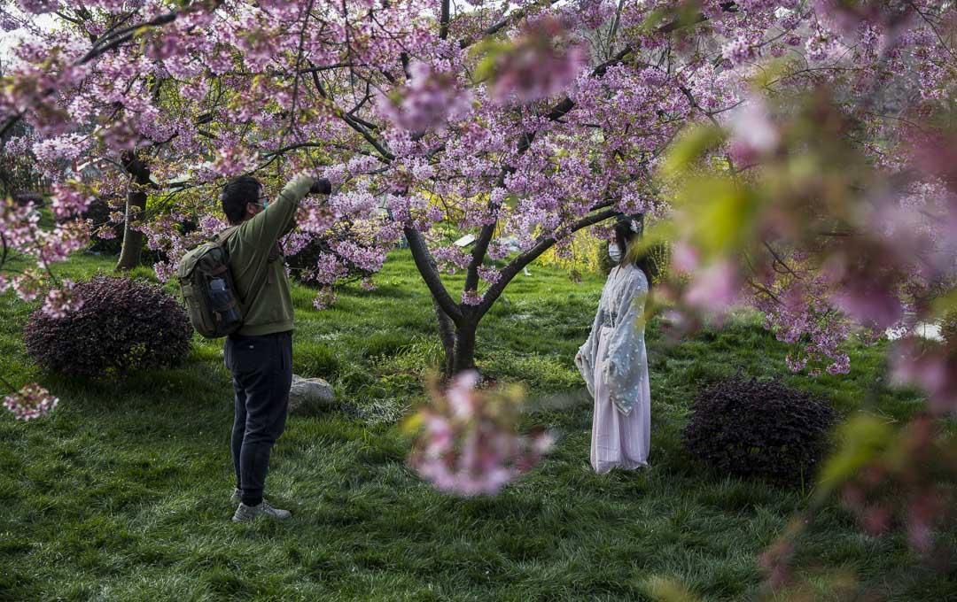 武漢東湖櫻園,結束了工作的援鄂医疗队人員,在園內休閒拍照。
