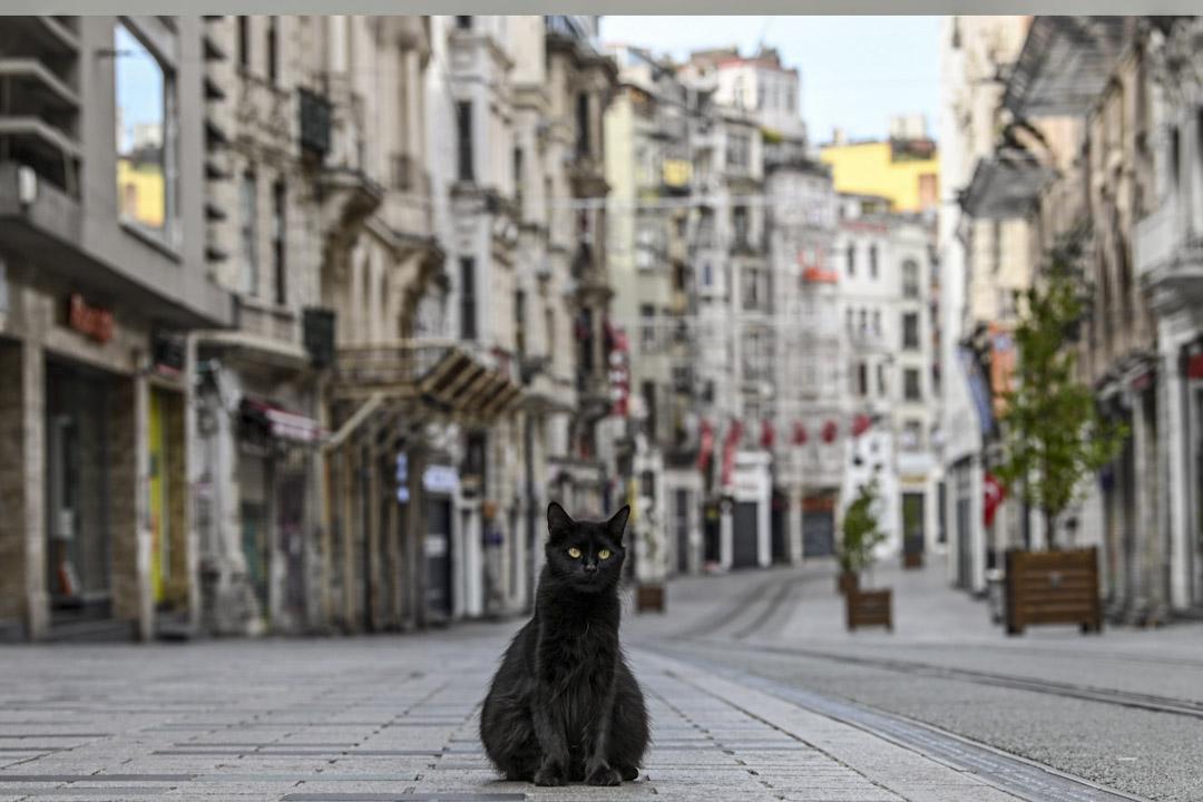 2020年4月19日,土耳其政府宣布實施為期兩天的宵禁措施,以防止新冠病毒傳播,一隻流浪貓呆在土耳其伊斯坦布爾的Istiklal大街上。