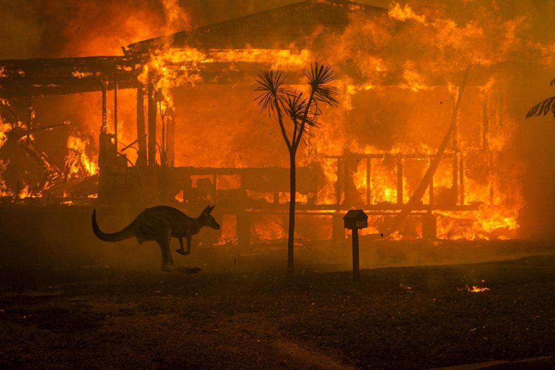 2019年12月31日,澳洲多處發生大火,一隻袋鼠正在逃亡。大火擴散至1260萬公頃的土地,造成至少3000個家庭流離失所,至少30人死亡。
