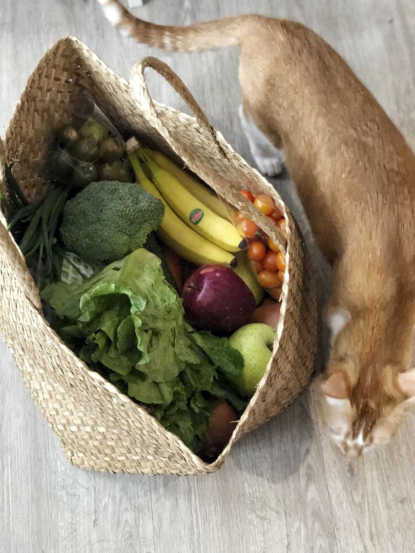 蔬果與貓。