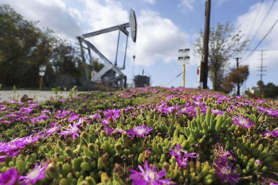 2020年4月20日,美國加州信號山一個閒置的油泵。