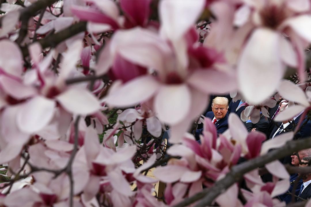 2020年3月13日,美國總統特朗普於白宮玫瑰園被花框著,他於新聞發布會上宣布全國緊急狀態。