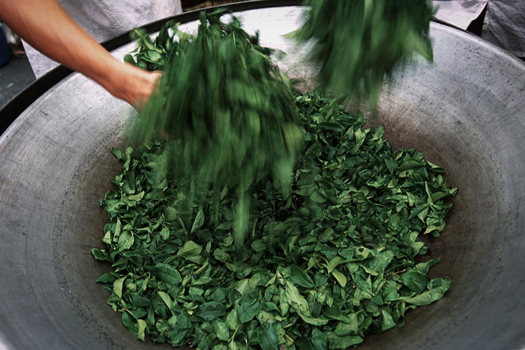 2002年5月1日,台灣南投縣工人在茶展上炒茶。