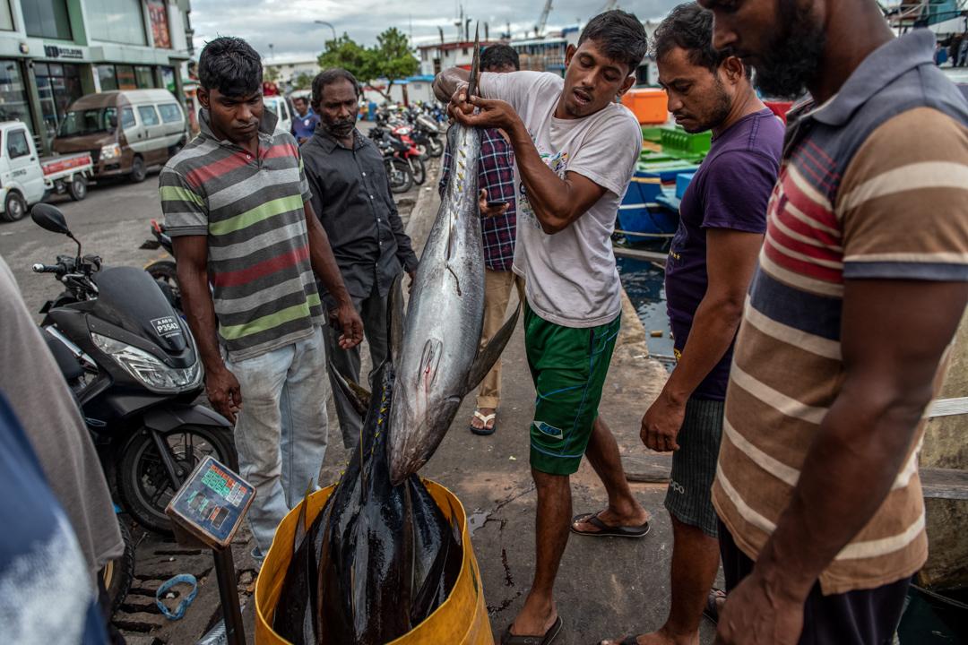 2019年12月16日,馬爾代夫馬累的漁民準備將漁獲運至漁市場。 攝:Carl Court/Getty Images