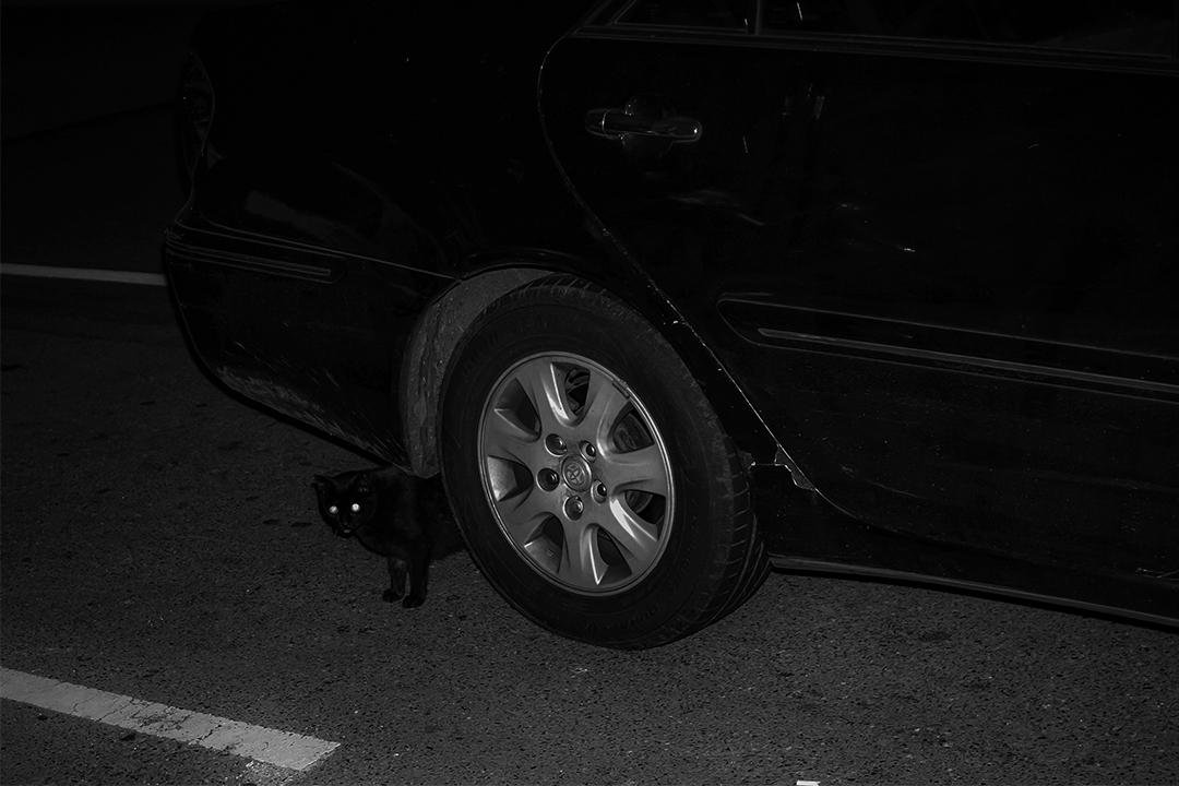 2020年3月4日新店,一隻流浪貓在深夜走在車下。