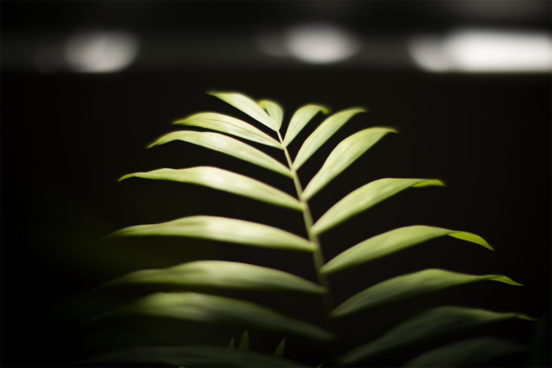 馬傑偉家內的植物。