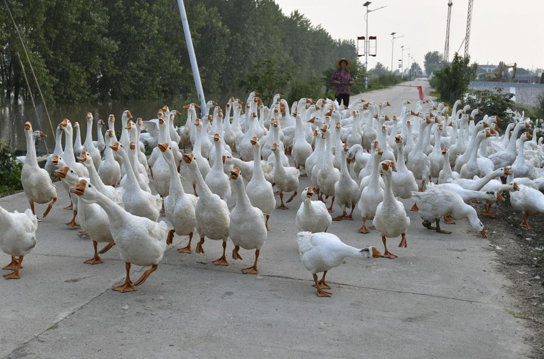 2020年7月20日,安徽省富陽市,王家壩泄洪將淹沒村莊。