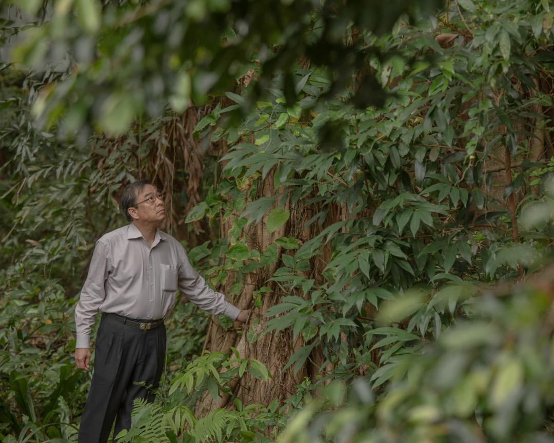 樹木專家詹志勇說,人和樹有不解之緣,有時連人也不察覺,那是與生俱來的。