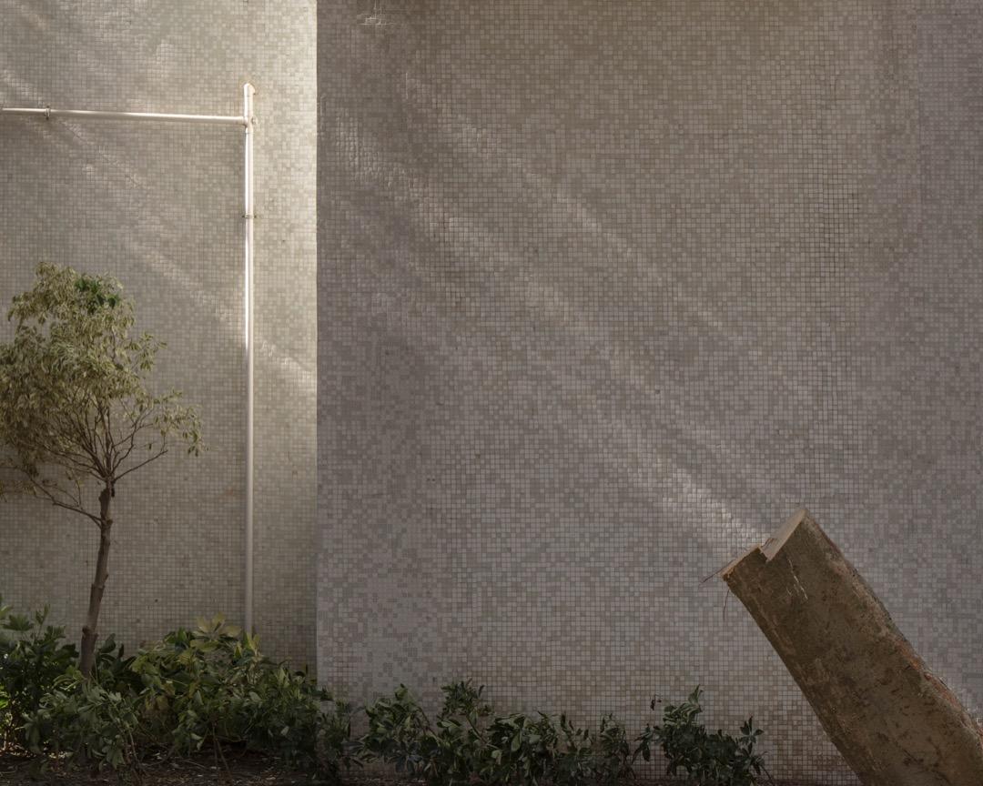 2018年9月,超強颱風山竹吹襲香港後,政府上報說六萬五棵樹倒塌,但詹志勇和愛樹朋友估計,倒樹超過十萬。