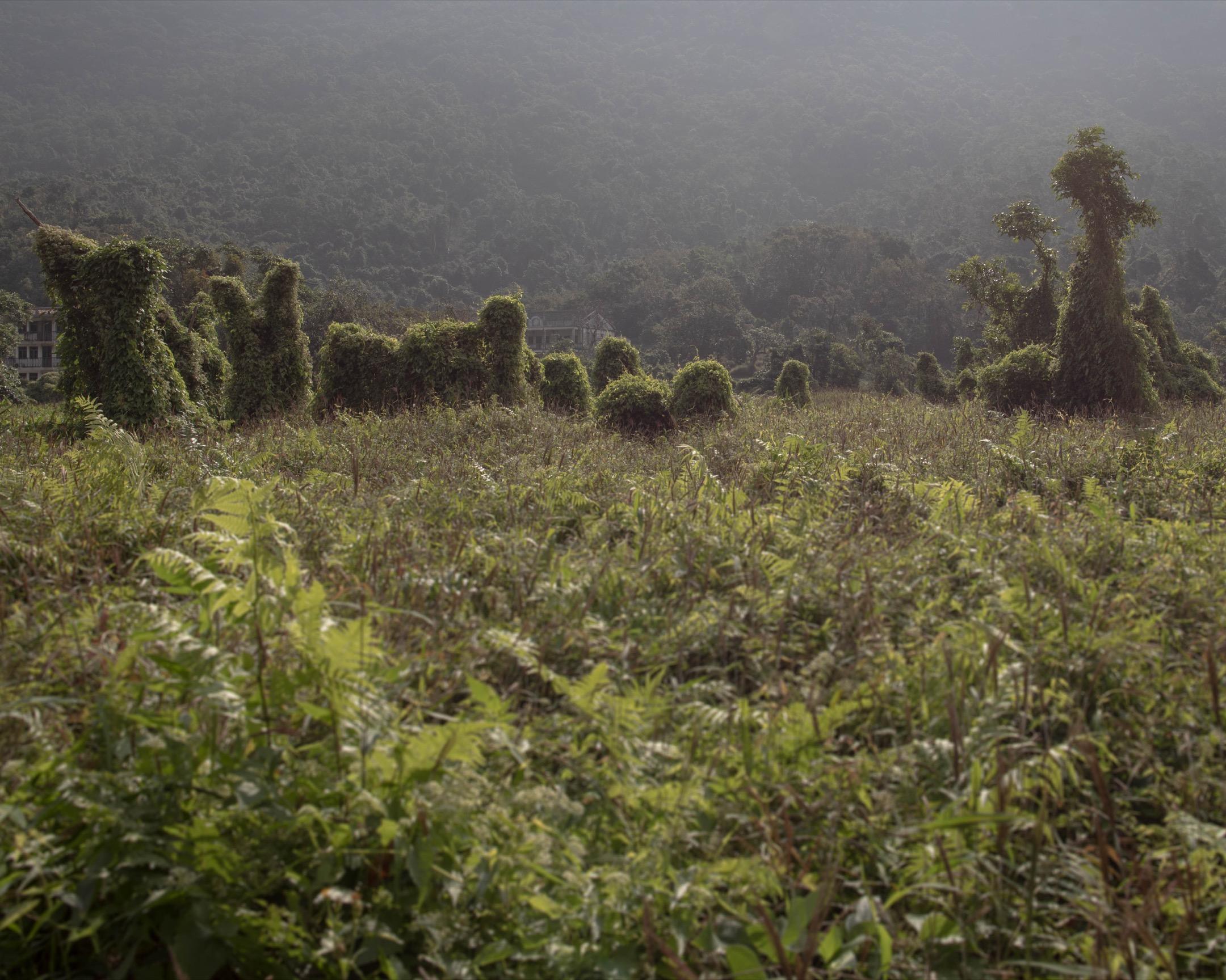 當人走了或死去,歷史要過渡,種下的樹在原地繼續生長,走了或死去的人因樹而生命像延續。 攝:Stanley Leung/端傳媒