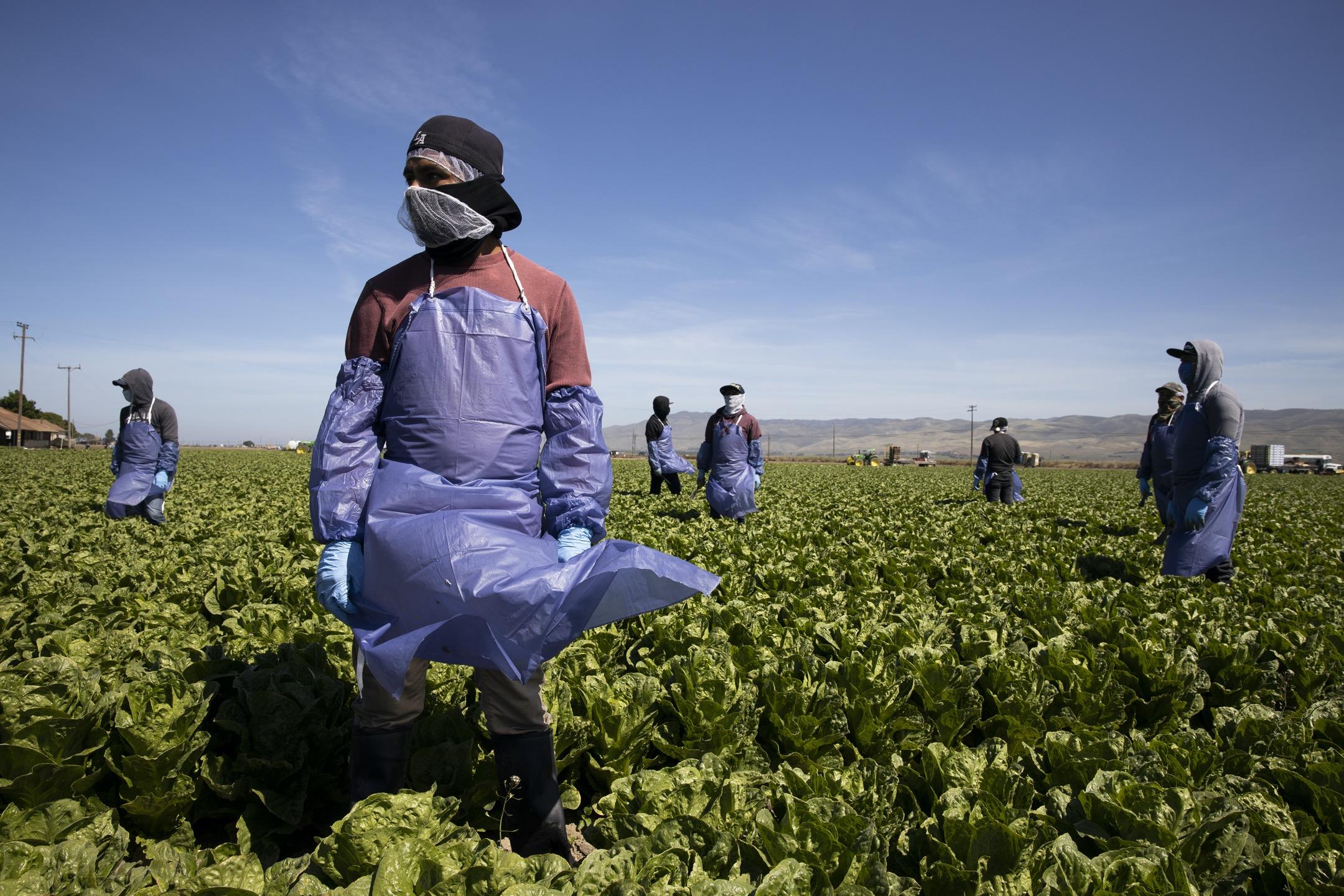 從三月到五月,美國農業州陸續傳出食品供應鏈受到嚴重衝擊。 攝:Brent Stirton/Getty Images