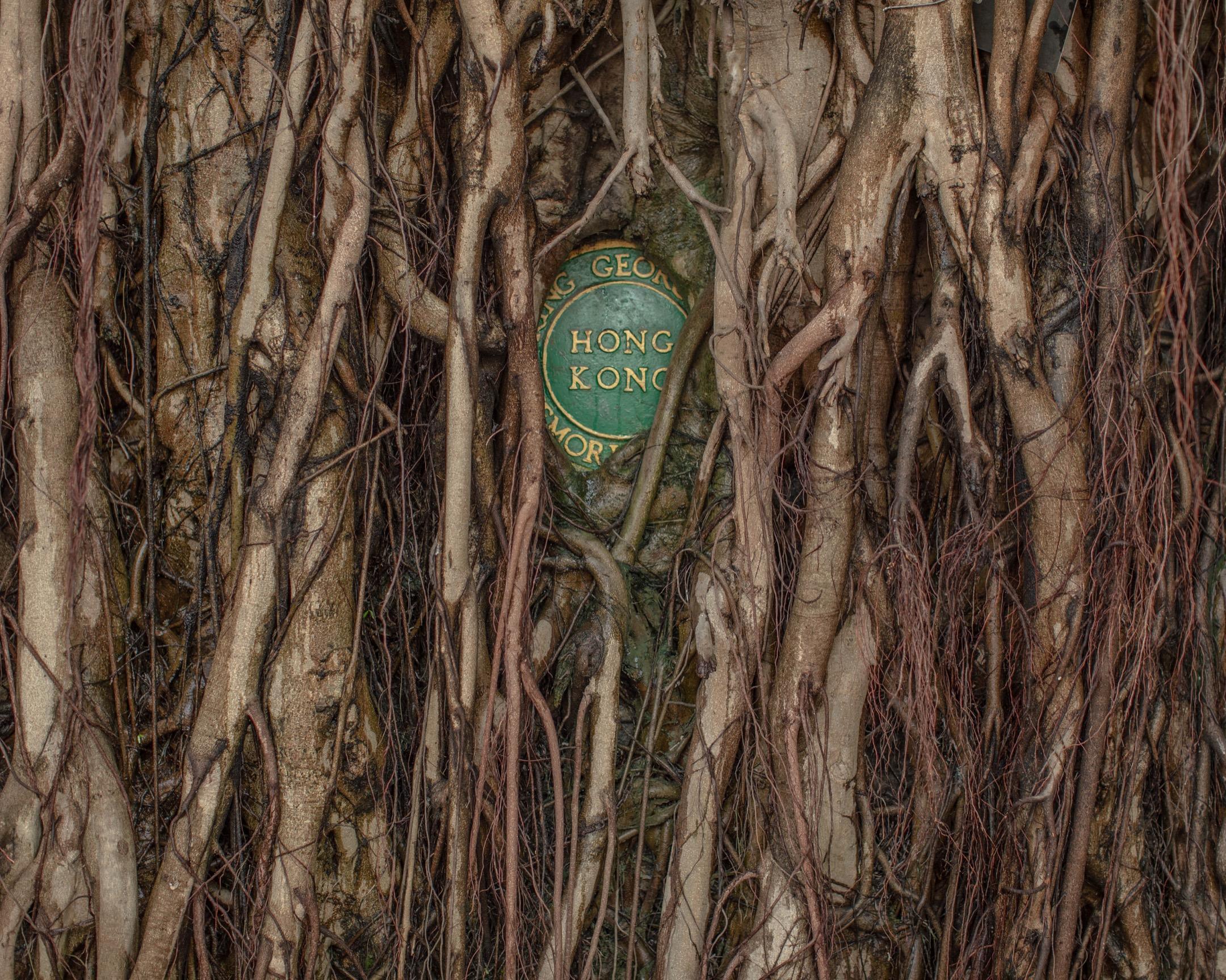 香港佐治五世紀念公園。 攝:Stanley Leung/端傳媒