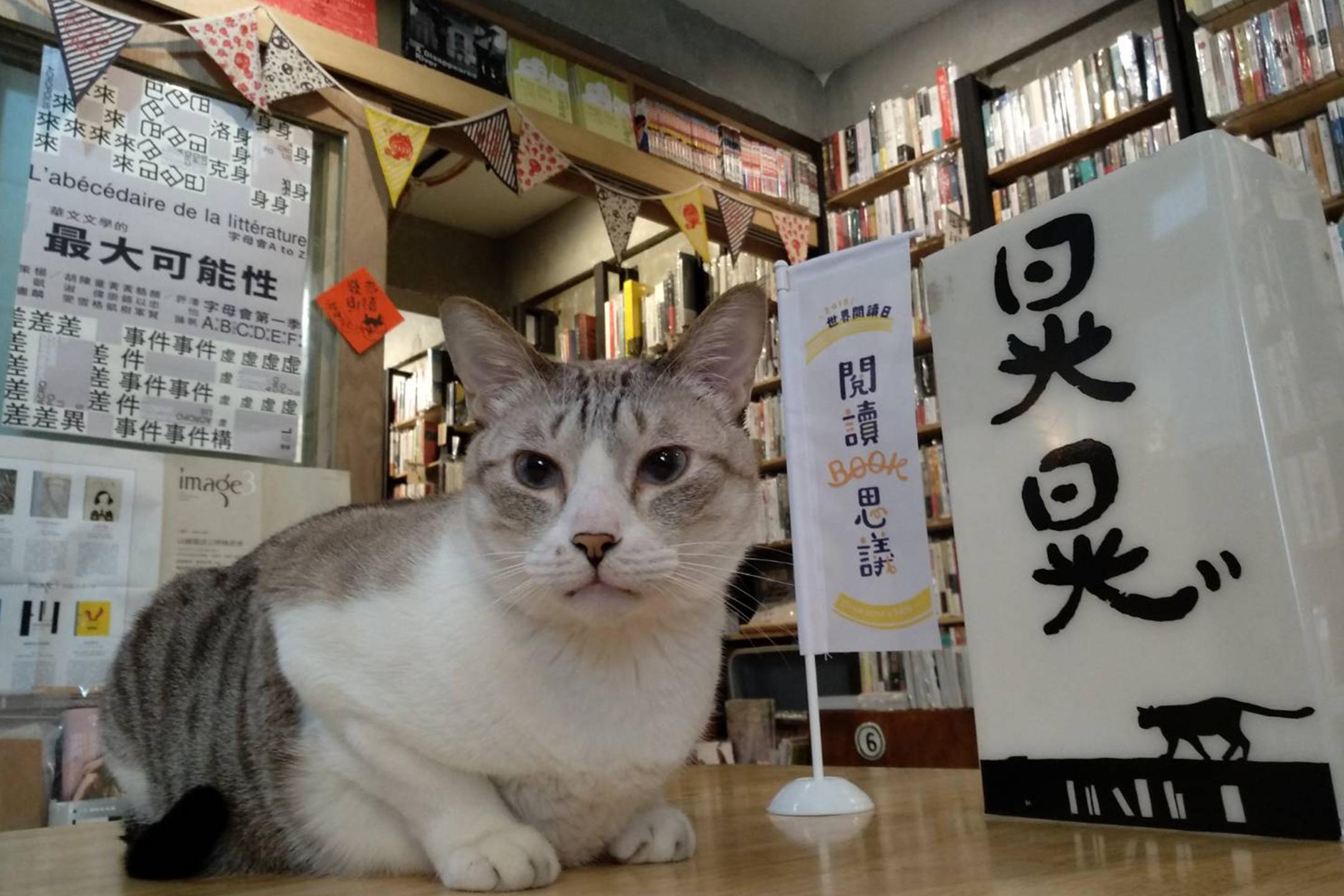 晃晃二手書店