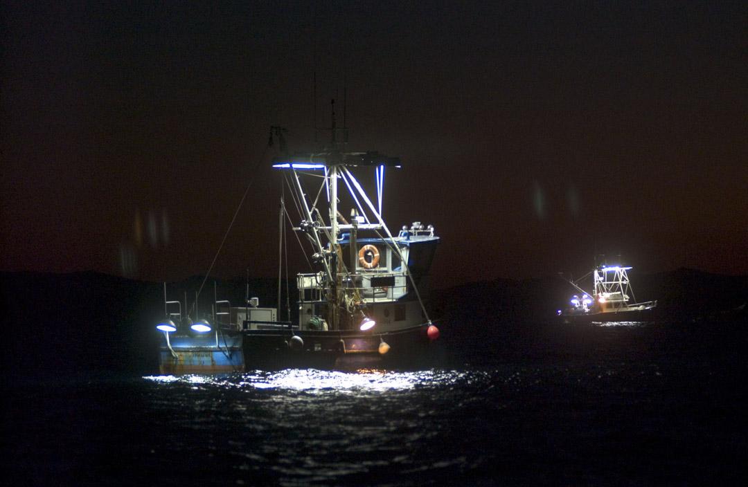 釣魷船作業在晚上,船舷兩側掛着的燈泡打開把海面照地慘白,魷魚愛亮光追尋而至,船員們再往海裏扔釣鈎,把群聚而至的魷魚釣起。
