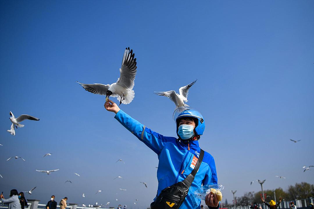 2020年3月11日昆明,外賣員在餵海鷗, 在2019冠狀病毒爆發期間,客戶在食品配送平台上訂購了食物讓外賣員餵食。 攝:Liu Ranyang/China News Service via Getty Images
