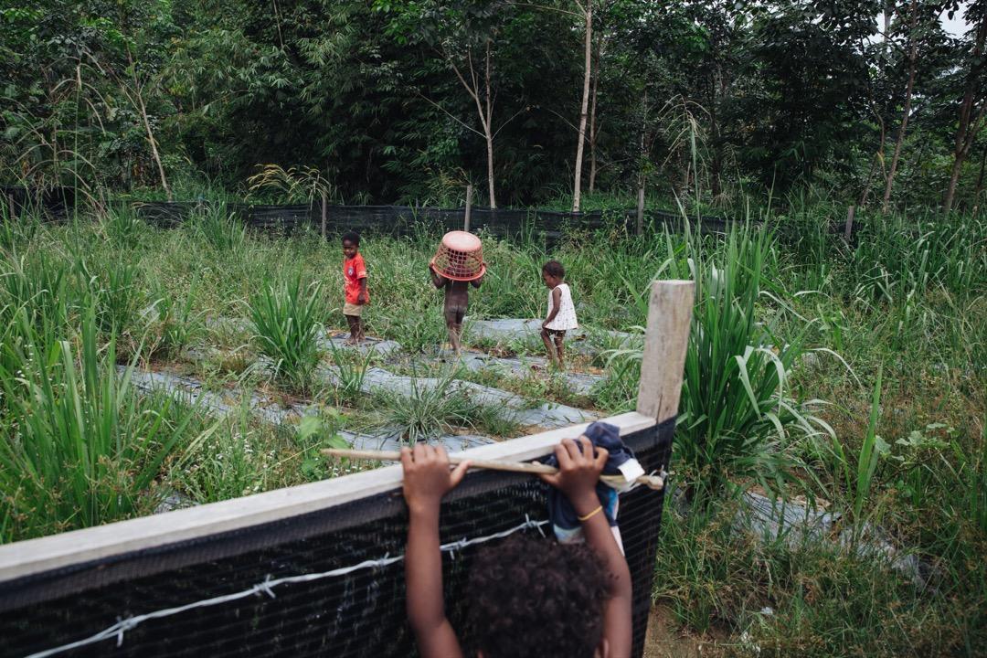 巴迪族利用後方空地種了一些作物。