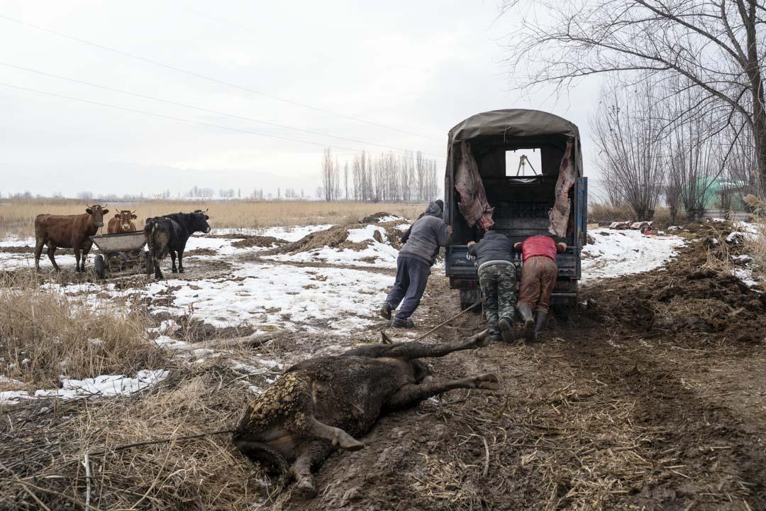 2020年1月3日,吉爾吉斯斯坦, 米爾方,法里德(Farid)幫吉爾吉斯的屠夫推車。