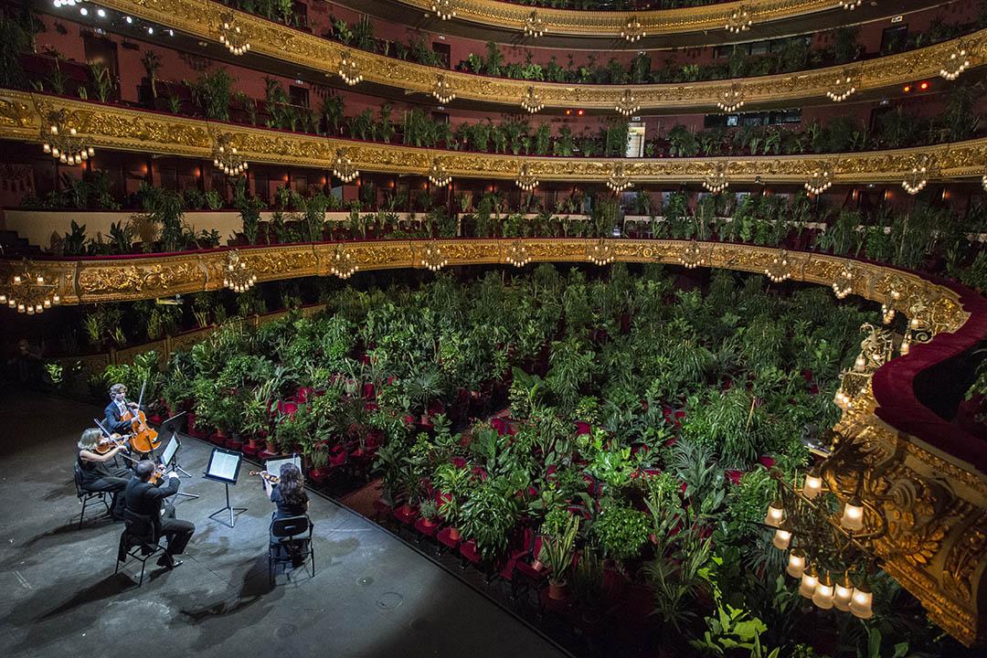 2020年6月22日,西班牙巴塞隆拿的利塞奧大劇院解封後演出,藝術家 Eugenio Ampudia將2,292株植物放進歌劇院作觀眾,並由弦樂四重奏單位演出普契尼的樂曲。