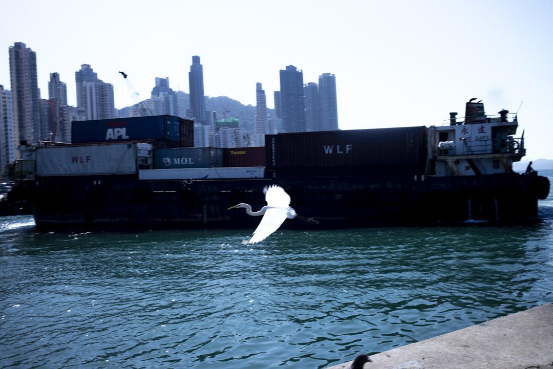 2020年﹐香港西環碼頭一隻鳥飛過。 攝:林振東/端傳媒