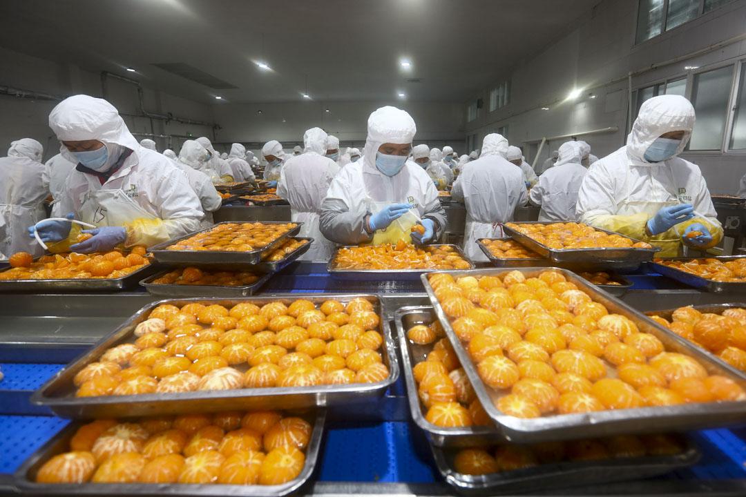 2020年12月1日,淮北安徽一家食物工廠,僱員在罐裝桔子生產線上工作。