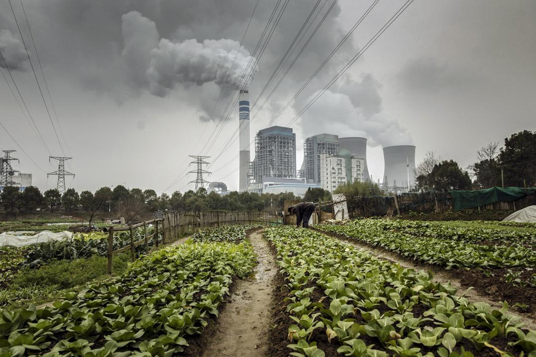 2019年1月16日,中國安徽省銅陵市一家燃煤電廠前有一名男子在田間種菜。