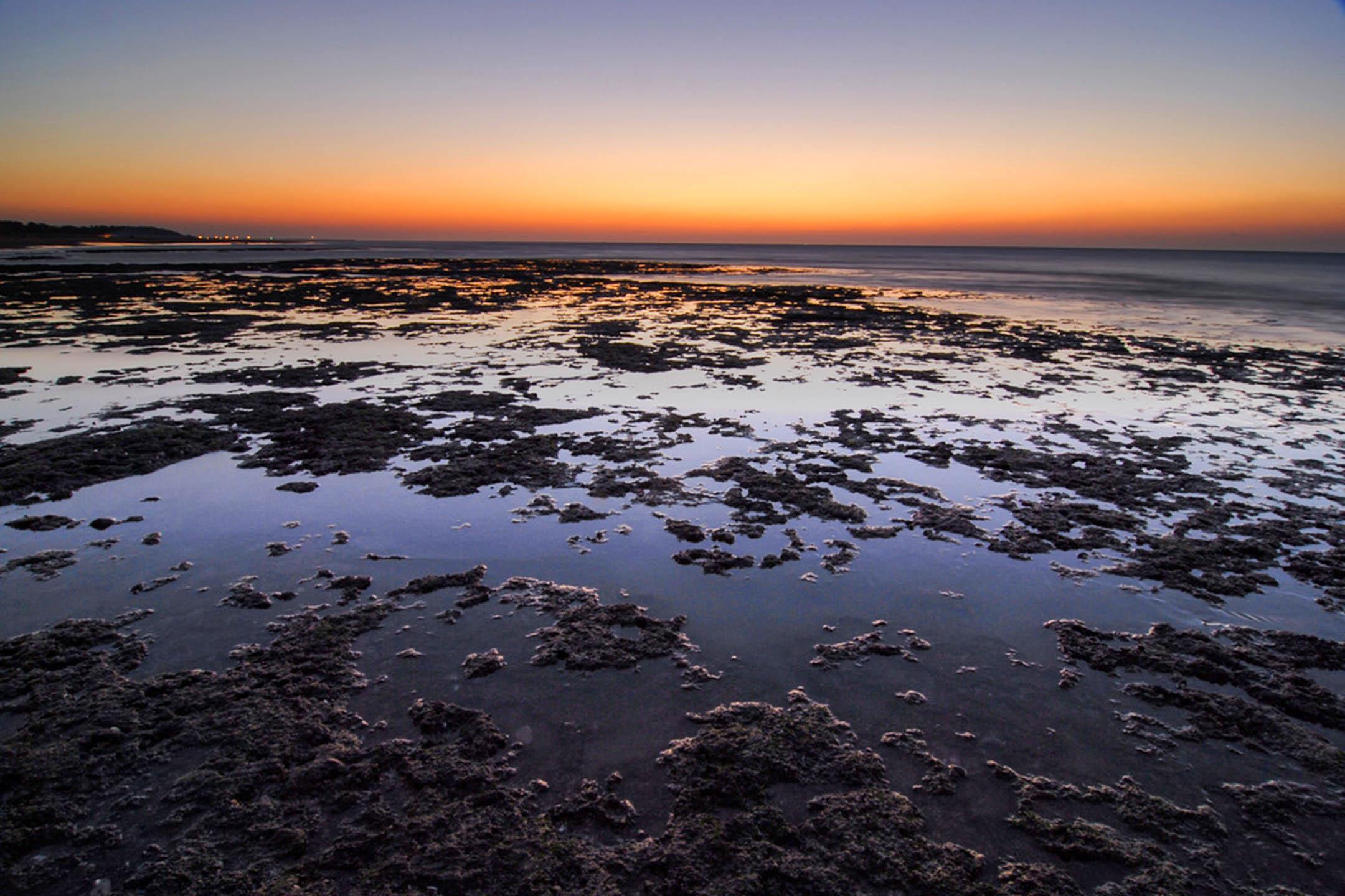 桃園的大潭藻礁。 圖:網上圖片