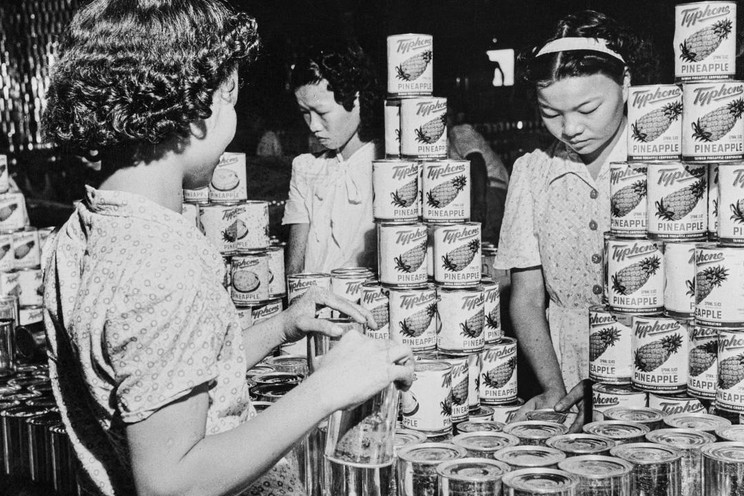 1955年1月1日台北,鳳梨產業蓬勃發展。