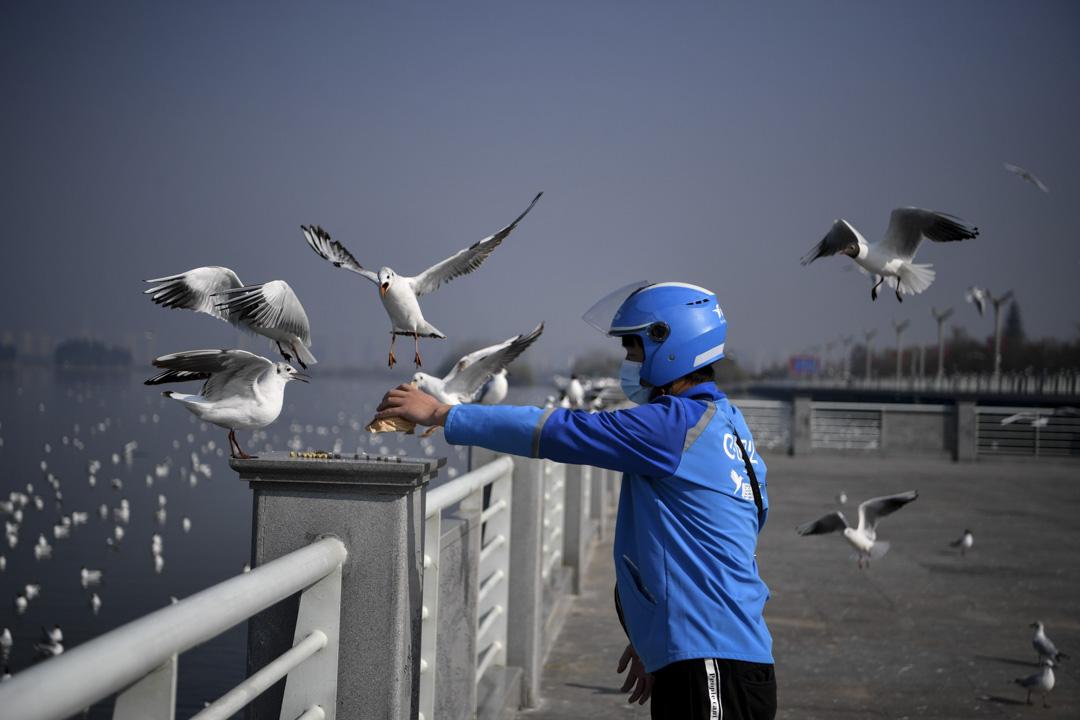 2020年3月11日,雲南昆明的蜂鳥配送外賣員在水壩餵養海鷗。