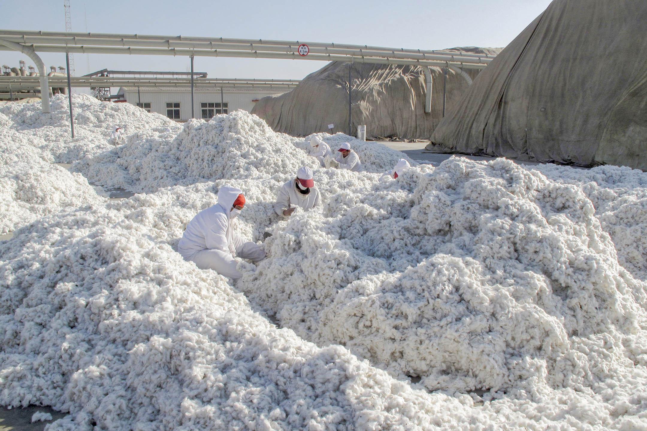 2015年12月1日新疆維吾爾自治區阿克蘇市,工人在一家加工廠裡工作。