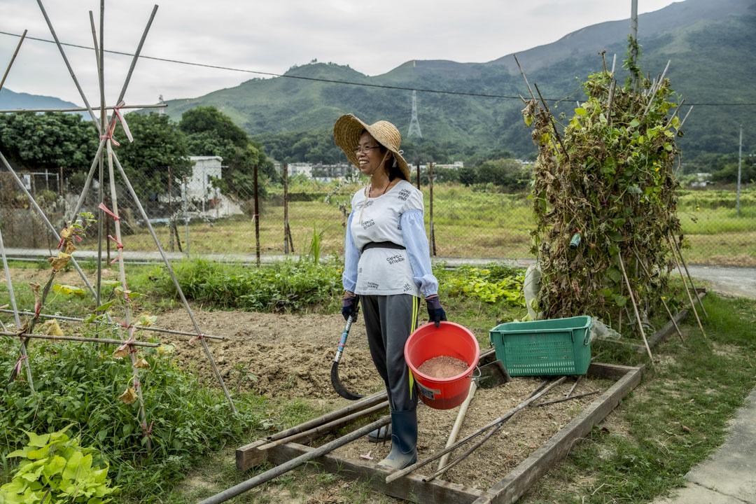 仲鈴是蕉徑老村民,性格開朗。不再養雞之後,現在和文哥一家一起打理活化後的田地。