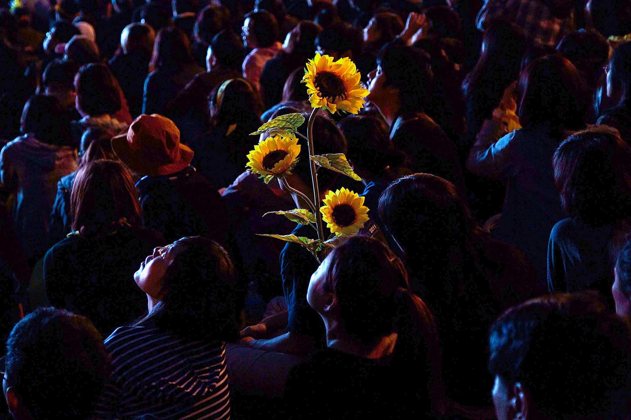 2014年3月30日台北,示威者拿著太陽花在凱達格蘭大道集會。