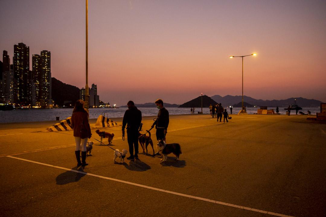 西環碼頭被海事處以防疫為由,在入口處圍封木板及上鎖,禁止非工作的民眾進入。圖為2020年2月18日,市民在西環碼頭觀賞日落。 攝:林振東/端傳媒