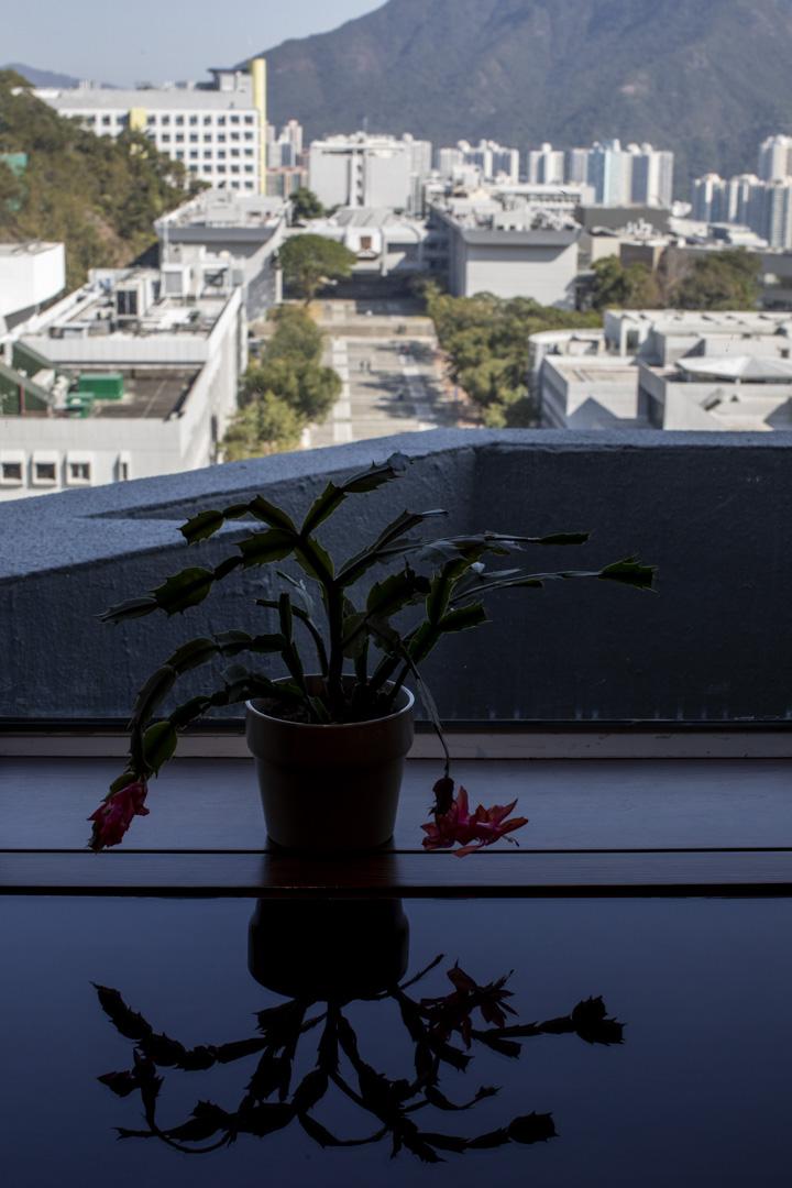 由中國研究服務中心的窗戶往外看,是中大百萬大道。