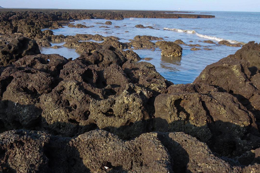 桃園的藻礁。