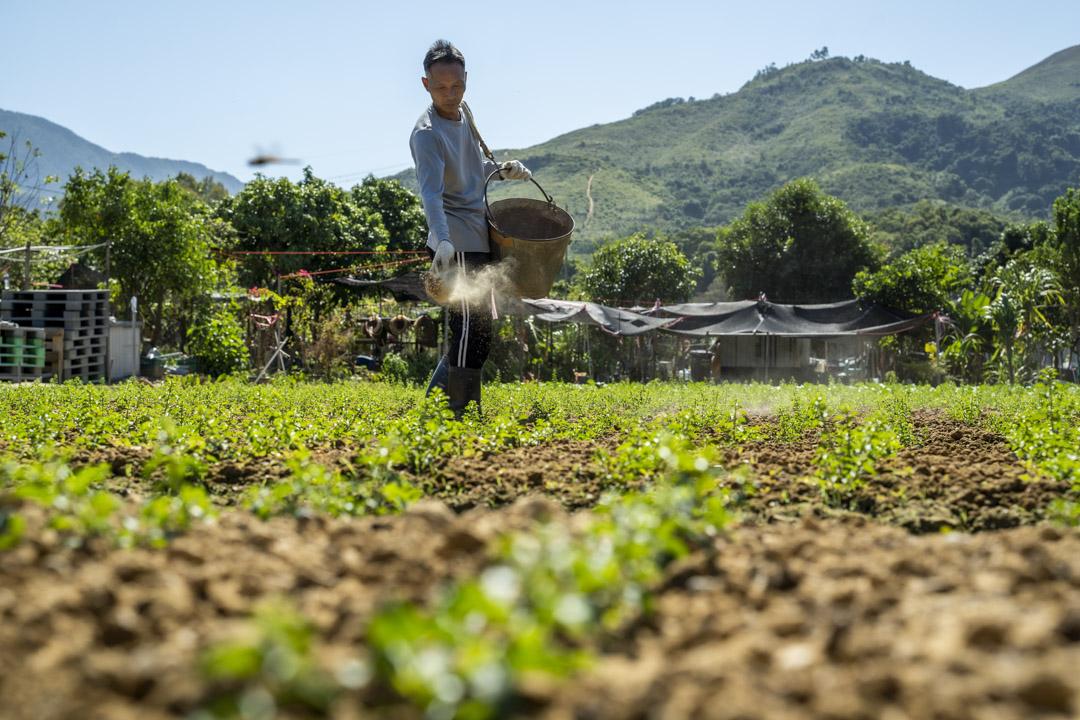 文哥在農田上工作。