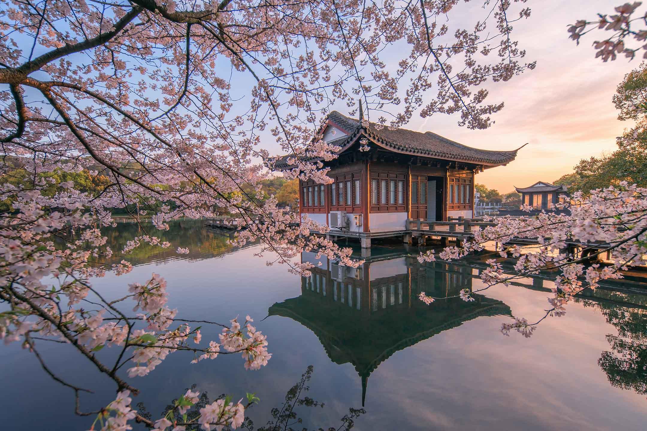 2021年3月22日,杭州西湖,櫻花在微風中飄動。