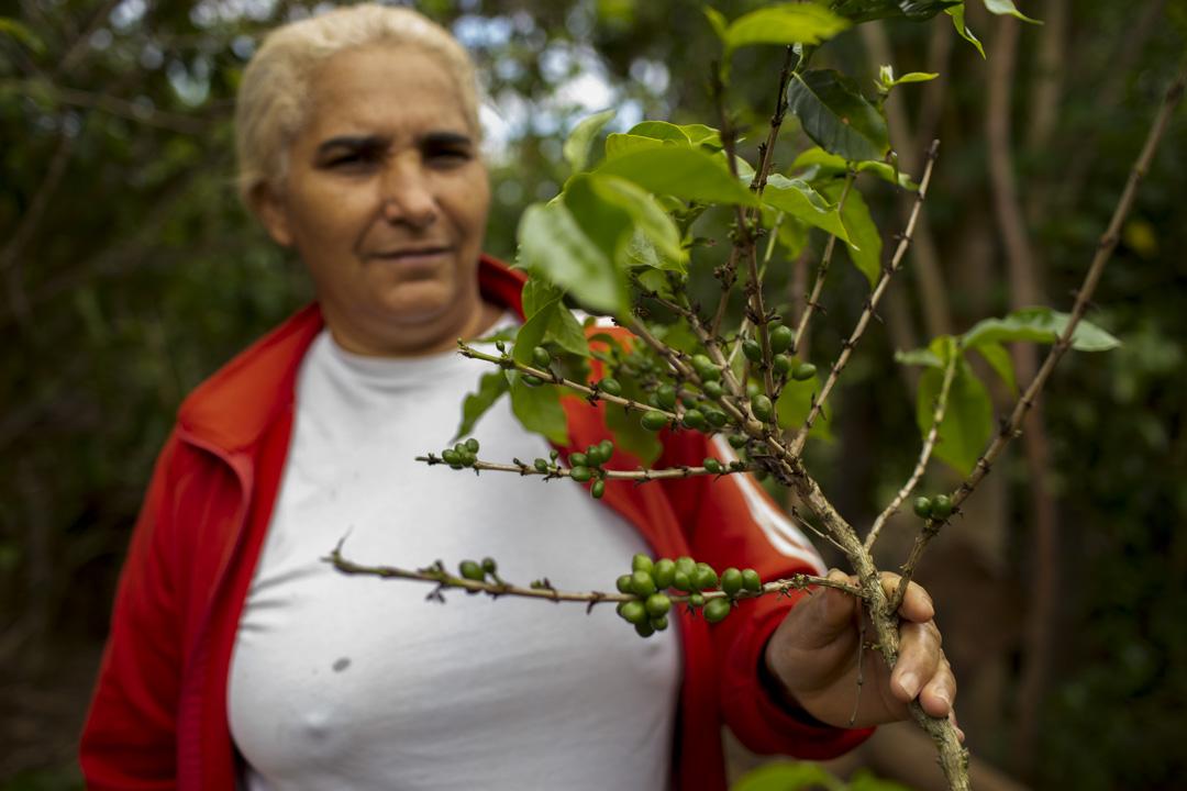Eva是格雷澤羅人(Geraizeiro),她在自己的土地上種蔬菜糧食,比起搬去城市生活,她認為自給自足的傳統生活更為可行。