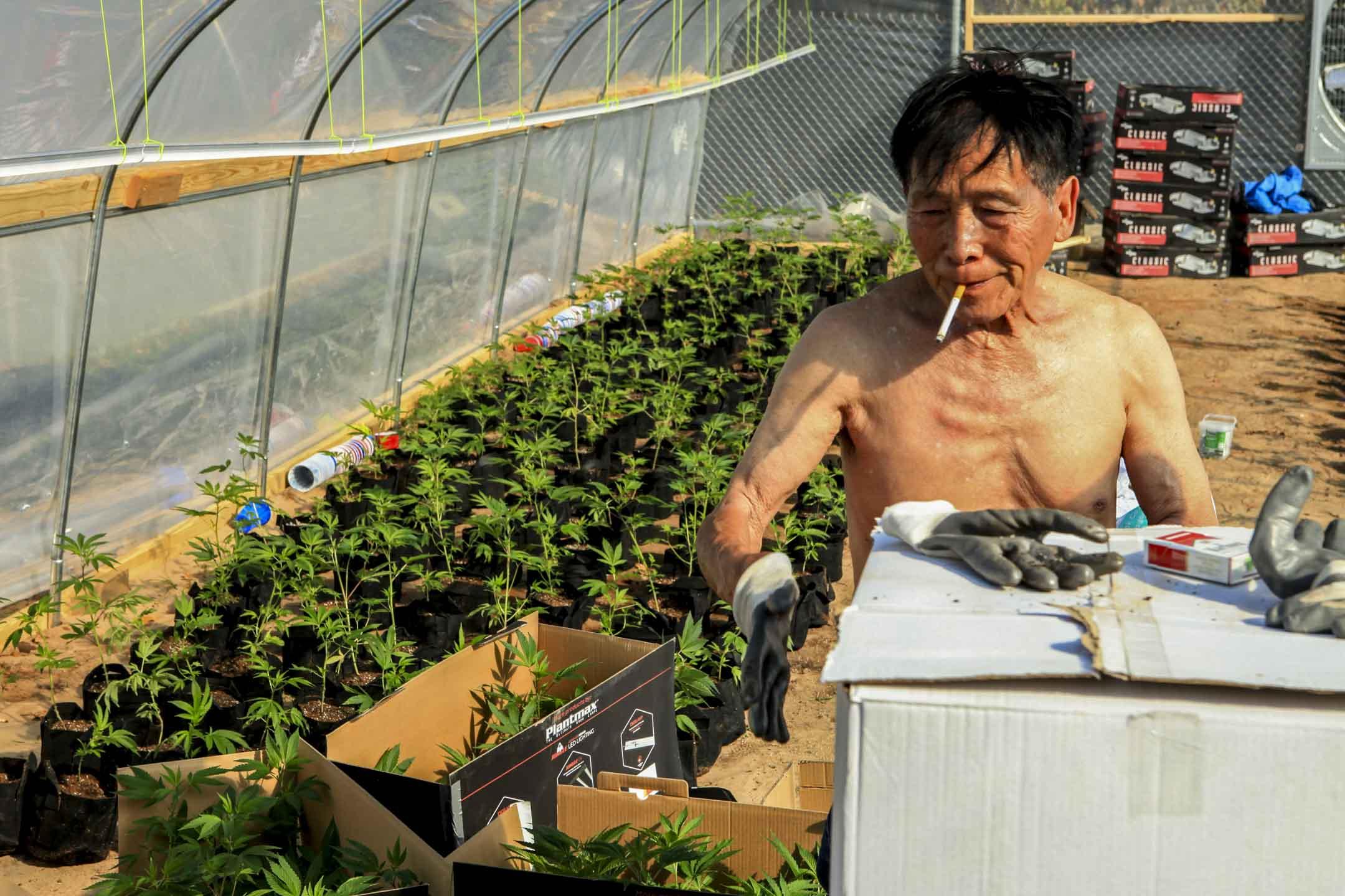 俄克拉荷馬州的大佛農場(Big Buddha Farm),一位來自香港的華裔工人正在忙着種植幼苗。 攝影:余物非