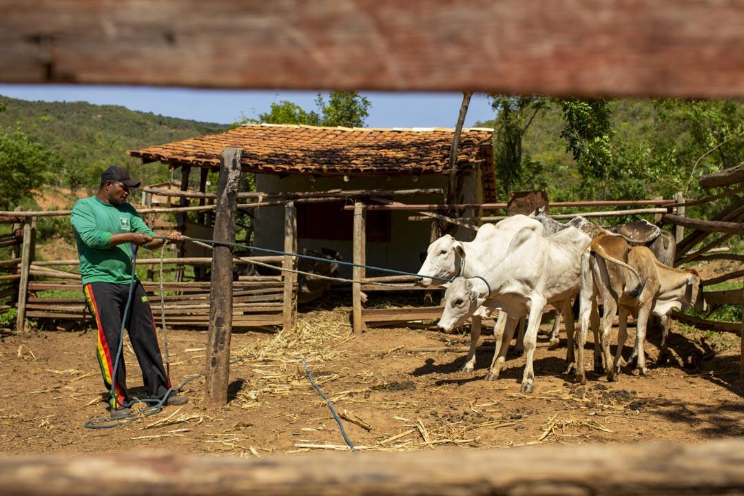 巴西米納斯吉拉斯州一個市鎮聖弗朗西斯科(São Francisco)的一家養牛的農戶。