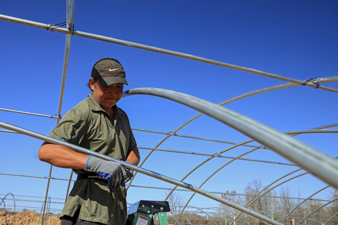 俄克拉荷馬州的大佛農場(Big Buddha Farm),一位工人正在搭棚。他曾經是餐館工人,跟隨投資人從新墨西哥州轉戰俄克拉荷馬繼續種植大麻。