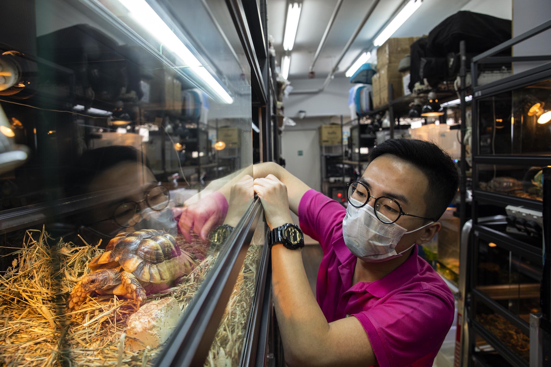 香港兩棲及爬蟲協會的義工黃朗研。