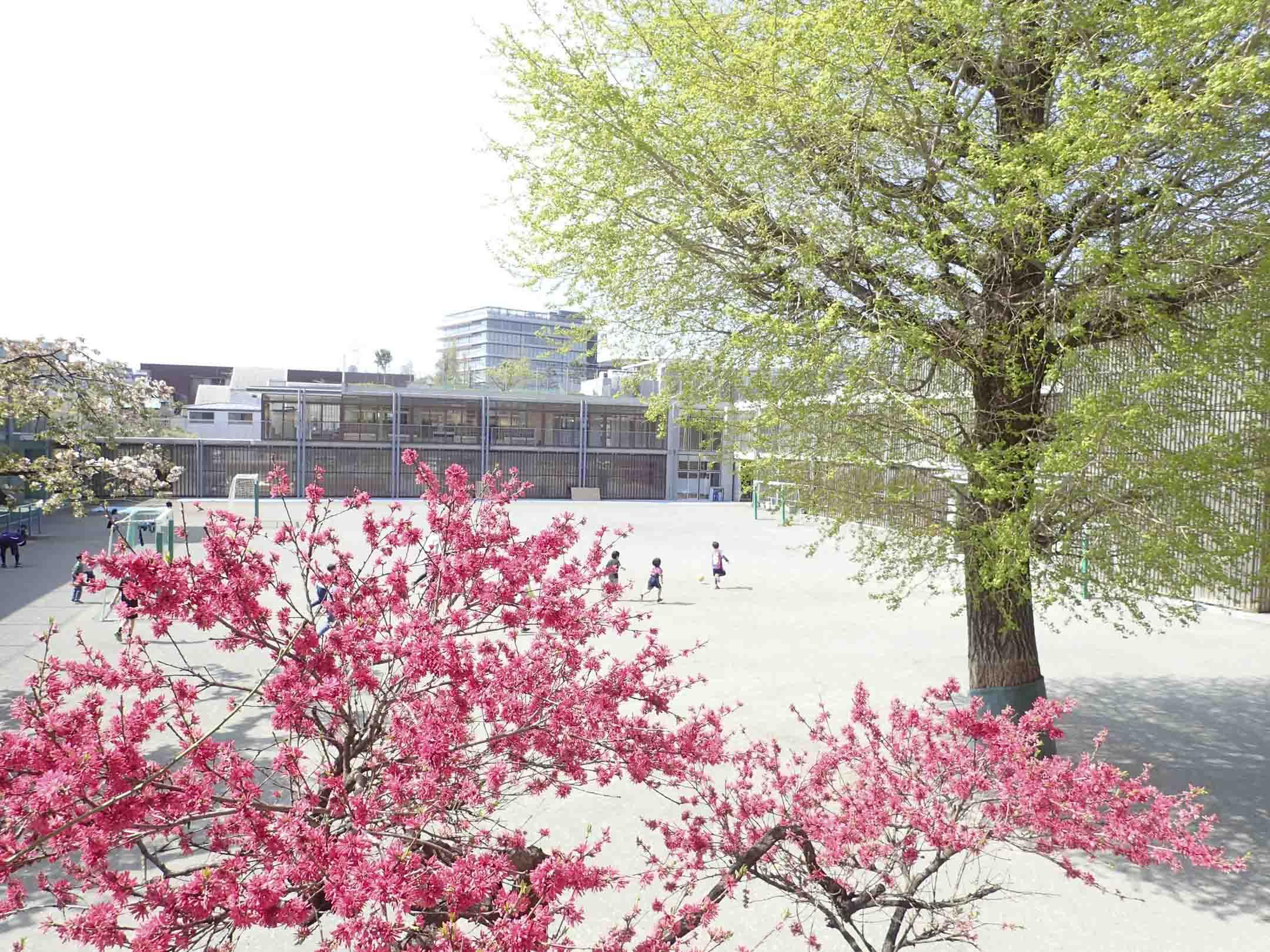 和光小學是創立於1933年的私立小學,獨立於日本文部科學省,不受控於國家制定的教育方針,創立以來始終堅持着「從孩子的願望出發」的教育理念。 圖片來源:和光小學博客