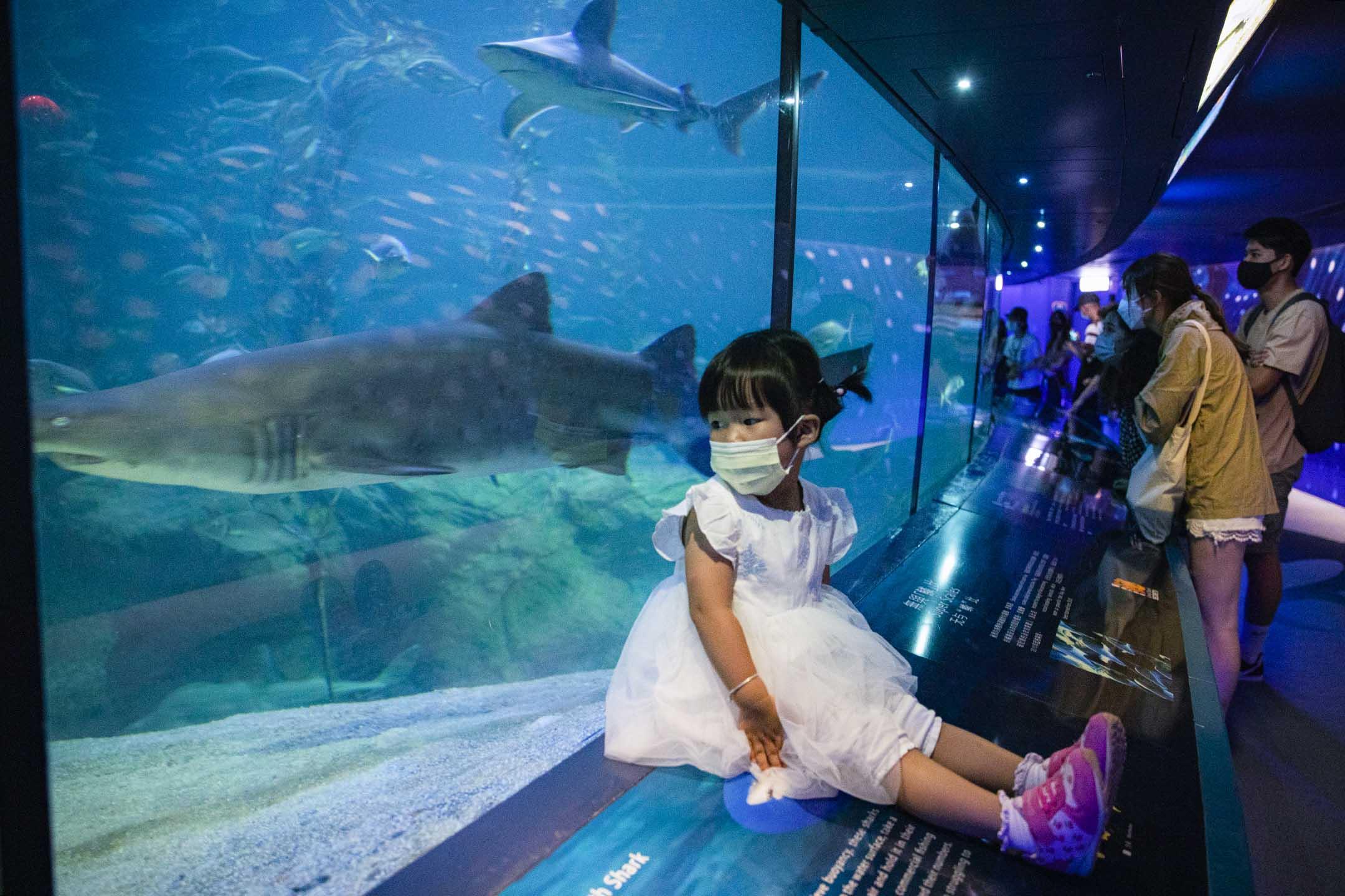 2021年4月15日,一個女孩在鯊魚館内。