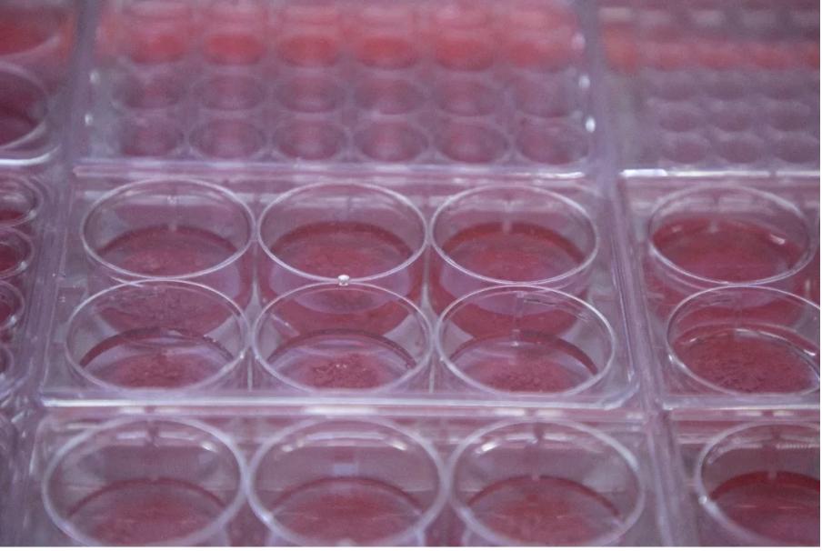 皿中之肉:曖昧的粉紅色下湧動的「新生命」