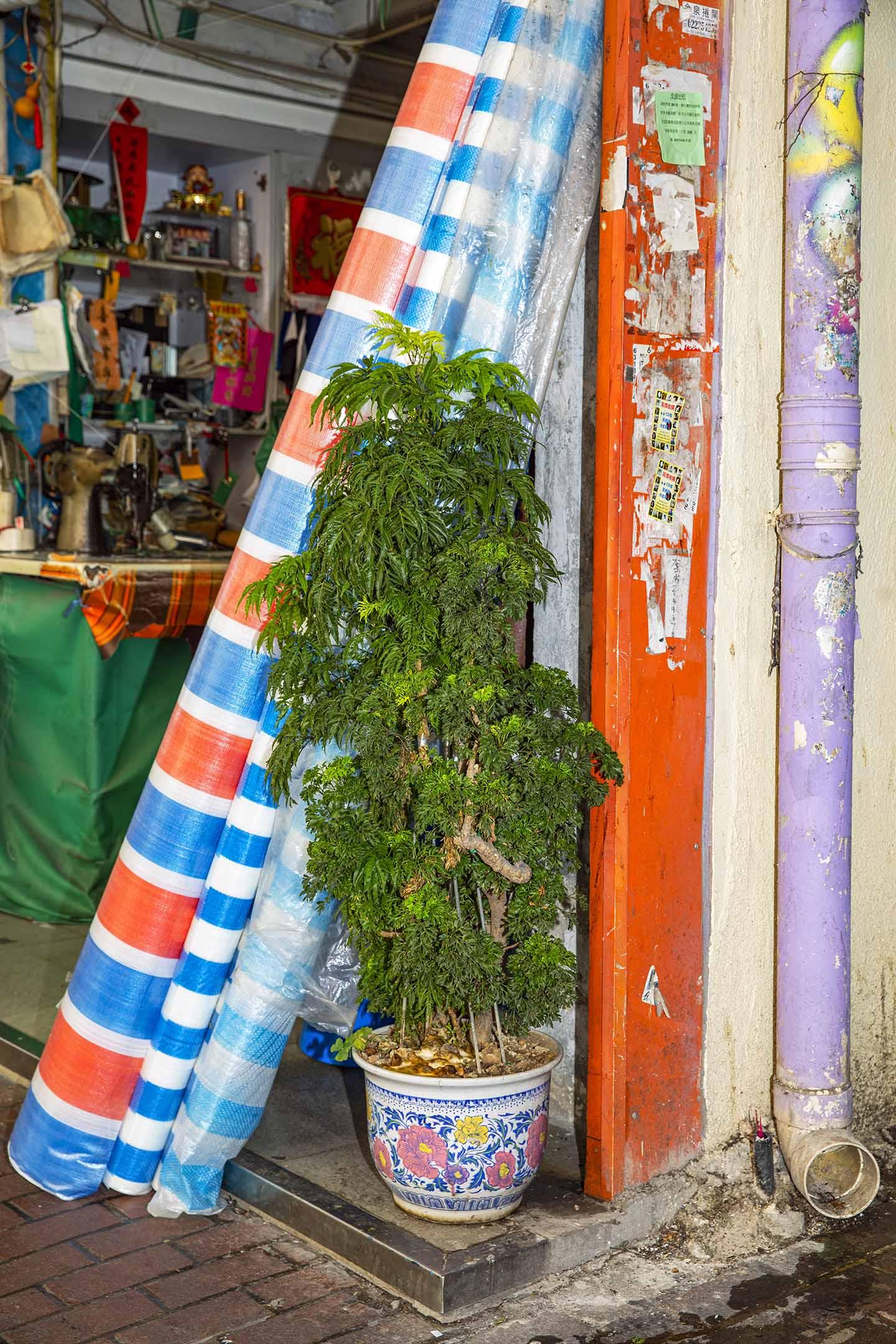 深水埗商店盆栽。