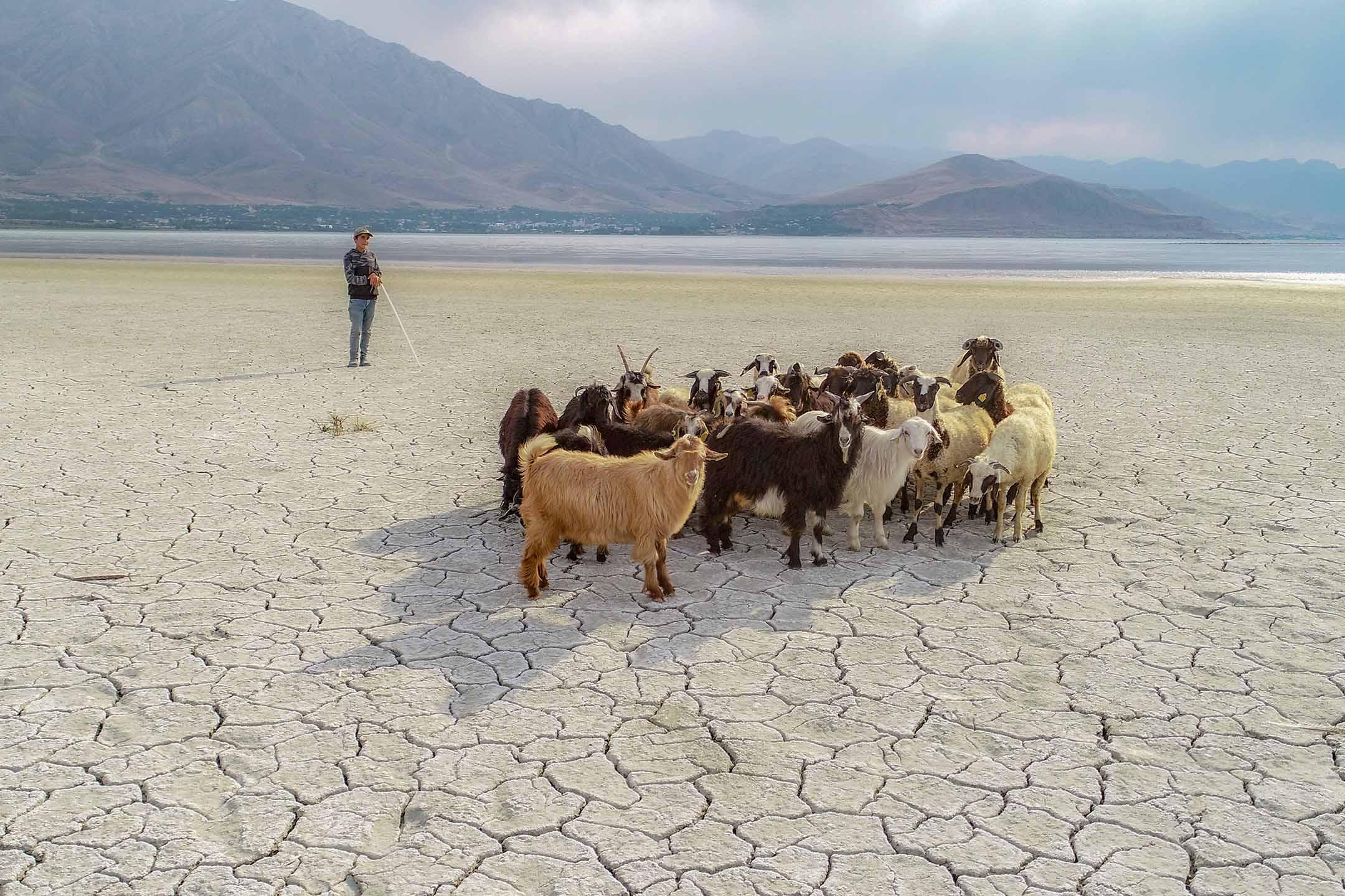 2020年9月1日土耳其,因全球暖化導致水位下降,乾涸的湖上一群山羊經過。 攝:Ozkan Bilgin/Anadolu Agency via Getty Images