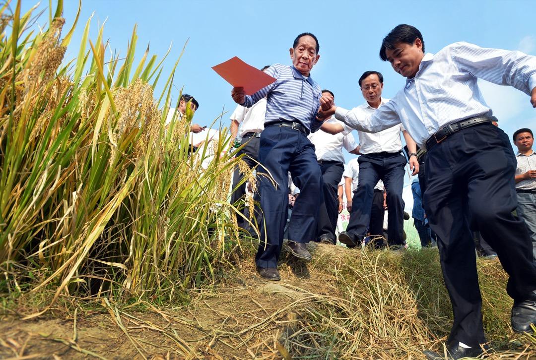 2014年10月10日,湖南省懷化市,袁隆平在官員陪同下到稻田視察。