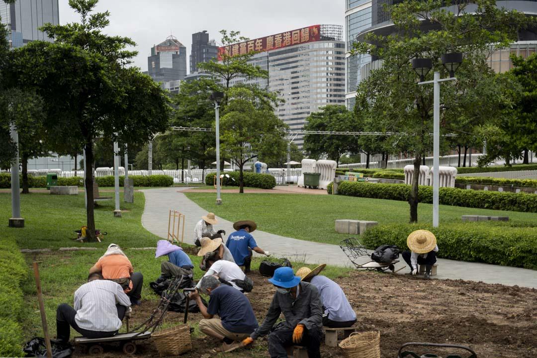 2021年6月28日,添馬公園,一班工人在修整泥土,預備中國共產黨成立100週年暨香港回歸祖國24週年的晚會活動。